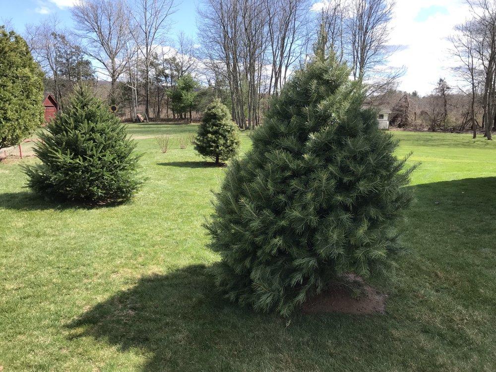 All Season Clean Up & Landscaping: Easthampton, MA