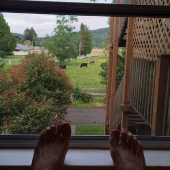 Photo of Miller Tree Inn - Forks WA United States. Cows in the & Miller Tree Inn - 92 Photos \u0026 38 Reviews - Hotels - 654 E Division ...