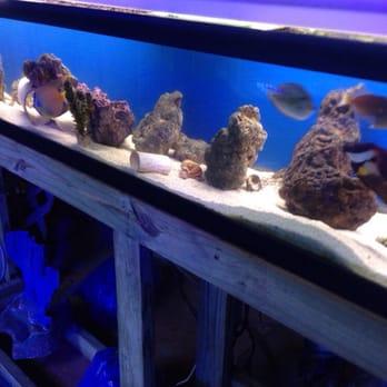 Austin aqua dome 26 photos 54 reviews pet stores for Fish store austin
