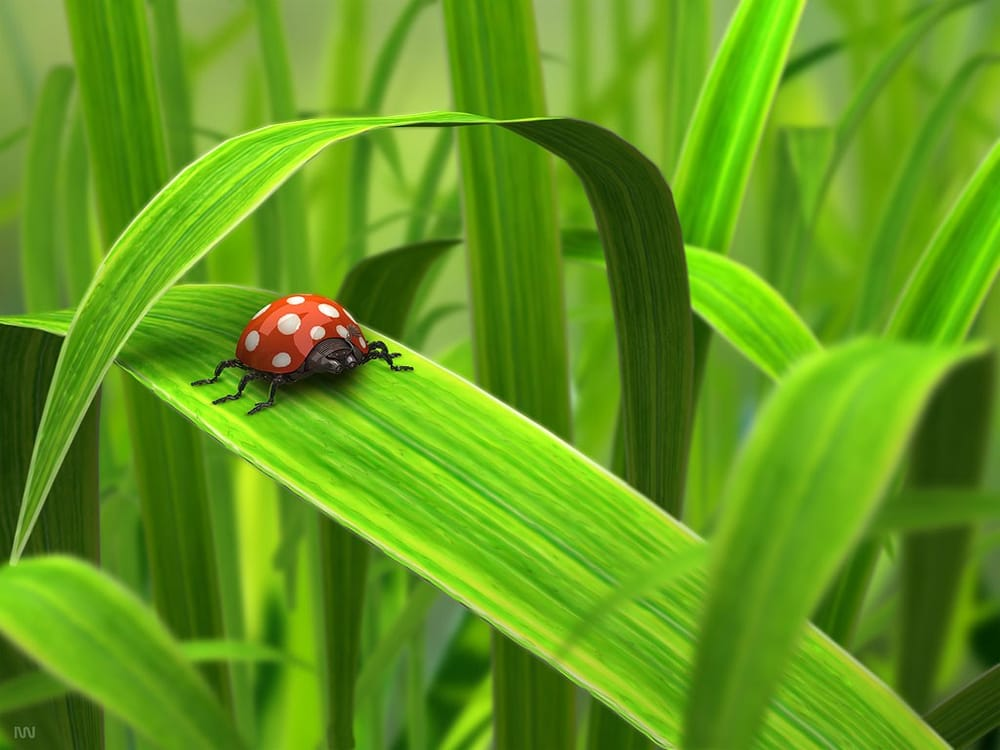 Ladybug Farms and Bakery: 203 Leesville Ave, Bessemer City, NC