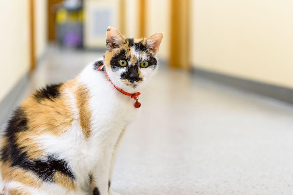 Mattituck-Laurel Veterinary Hospital: 940 Franklinville Rd, Laurel, NY