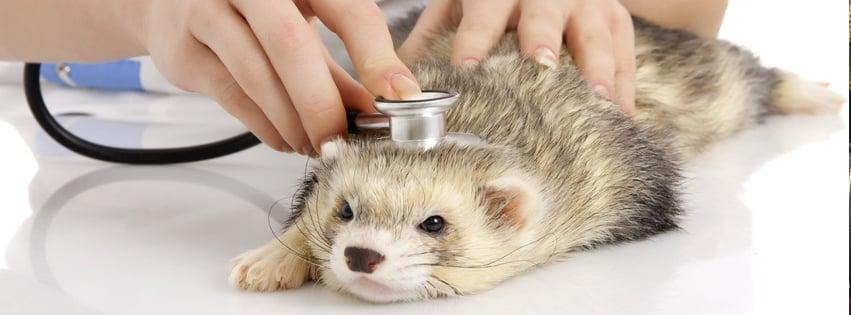 Cumberland Animal Hospital: 24 Hillcrest Rd, Cumberland, VA