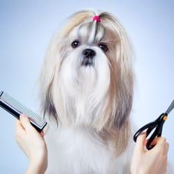 Curtain Call Pet Grooming Salon Pet Groomers 2220 Kensington Ave