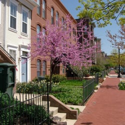Photo Of Townhomes On Capitol Hill   Washington, DC, United States