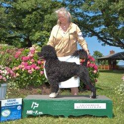 Oakland Dog Training Club - 12 Reviews - Pet Training - 5327