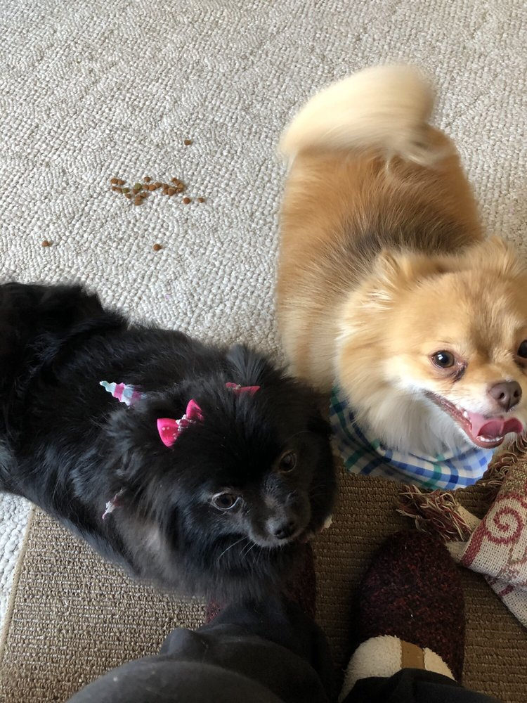 Blondie's Buddies Fur-baby Sitting & More: Anoka, MN
