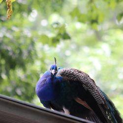 Bronx Zoo - (New) 3388 Photos & 1017 Reviews - Zoos - 2300
