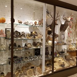 Photo Of The Evolution Store