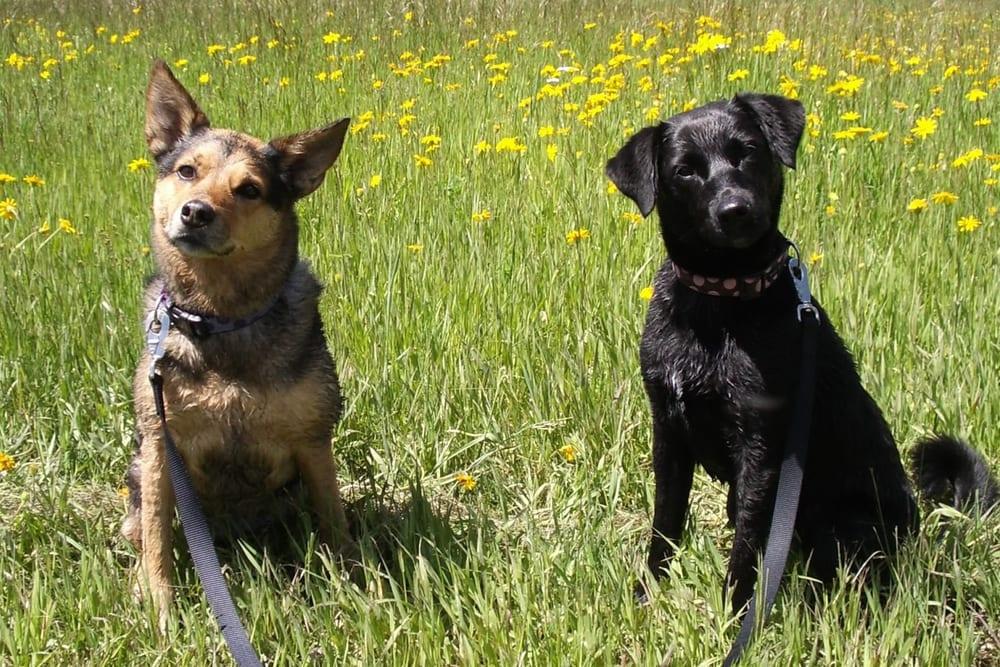 All Ears Dog Training: Castle Rock, CO