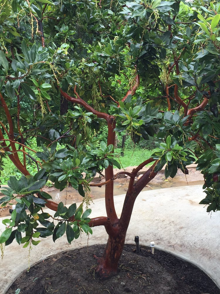 Bonfante specimen trees garden centres 1225 bloomfield for Specimen trees