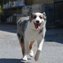 Holly Santana - (New) 13 Photos - Pet Training - Croton-on