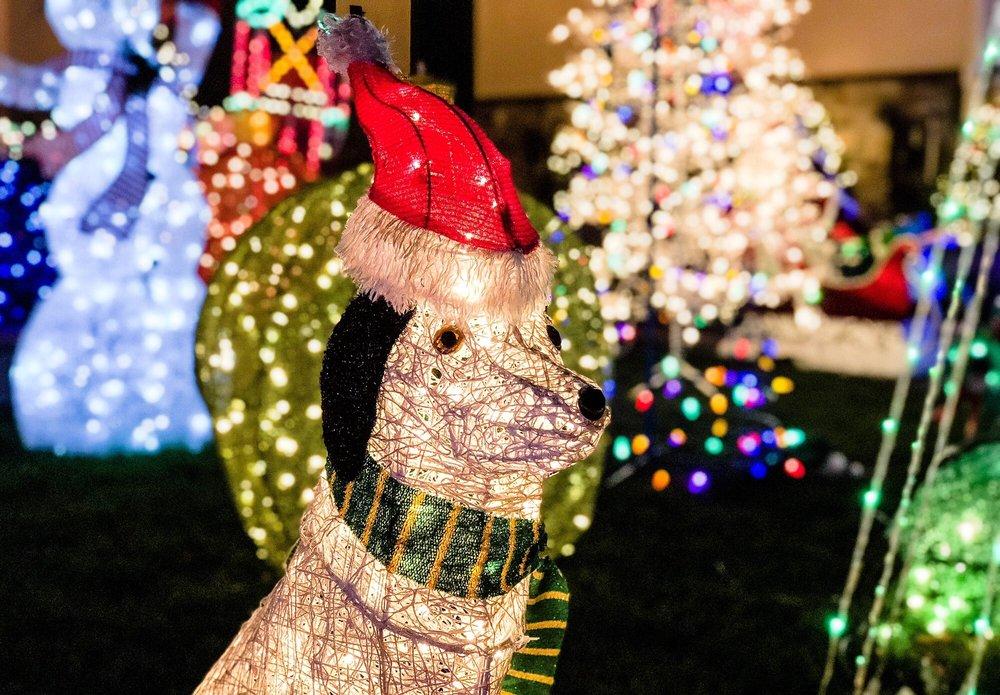 Christmas Tree Lane: 1900 Block Eucalyptus Ave, San Carlos, CA