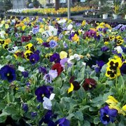 Photo Of Mike S Garden Centers Southlake Tx United States