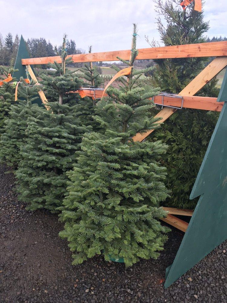 12 photos for Skyline Christmas Tree Farm - Photos For Skyline Christmas Tree Farm - Yelp