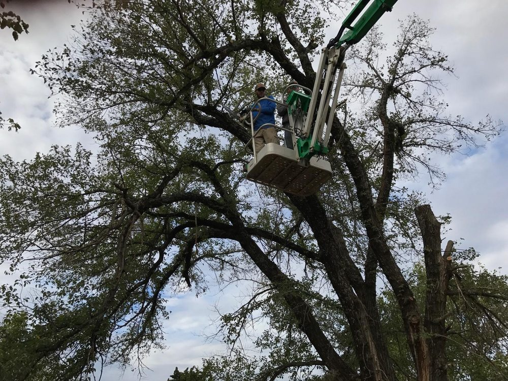 A Cut Above Lawn and Tree Service: Guthrie, OK