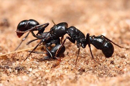 Plateau Pest Control: 1037 S Main St, Crossville, TN