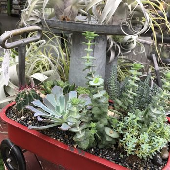Photo Of Orchard Nursery Lafayette Ca United States Sooo Cute Succulents