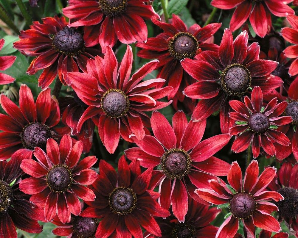 Bluestone Perennials: 7211 Middle Ridge Rd, Madison, OH