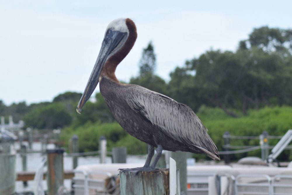 Jensen's Twin Palms Resort & Marina: 15107 Captiva Dr, Captiva, FL