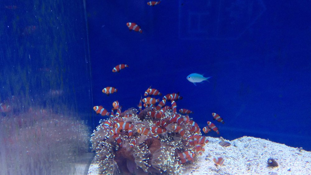 Clowns In Their Anemone Yelp