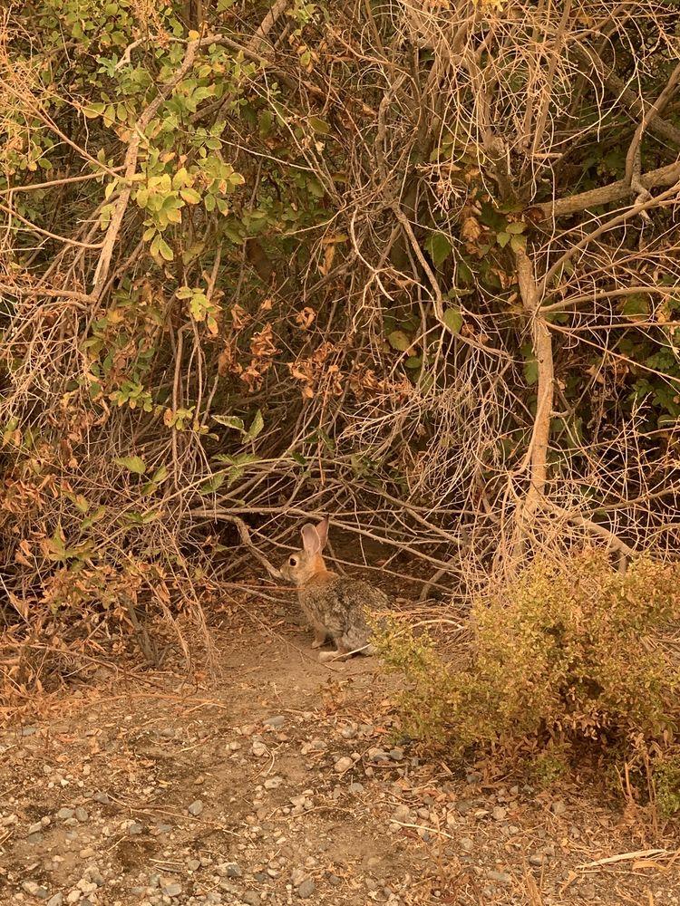 Photo of San Joaquin River Wildlife Refuge: Vernalis, CA