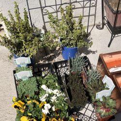 garden center nj. Photo Of Bast Brothers Garden Center - Mullica Hill, NJ, United States. Some Nj