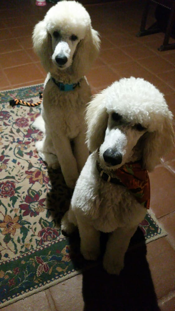 Temecula Pet Salon And Spa Temecula Ca