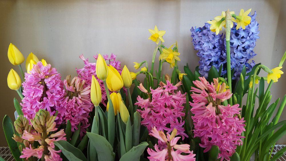 Beall's Florist: 9805 Main St, Damascus, MD