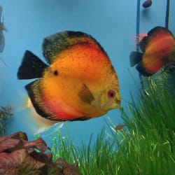Tropic Isle Aquarium - 10 Photos & 86 Reviews - Pet Stores