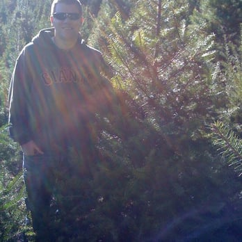Christmas Tree Farms Santa Cruz