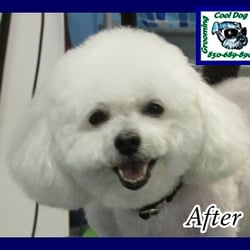 Crestview Dog Grooming