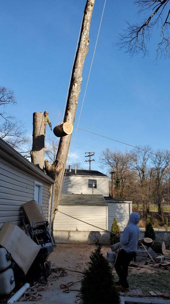 Marquez Tree Services: 4718 Mercury Dr, Rockeville, MD