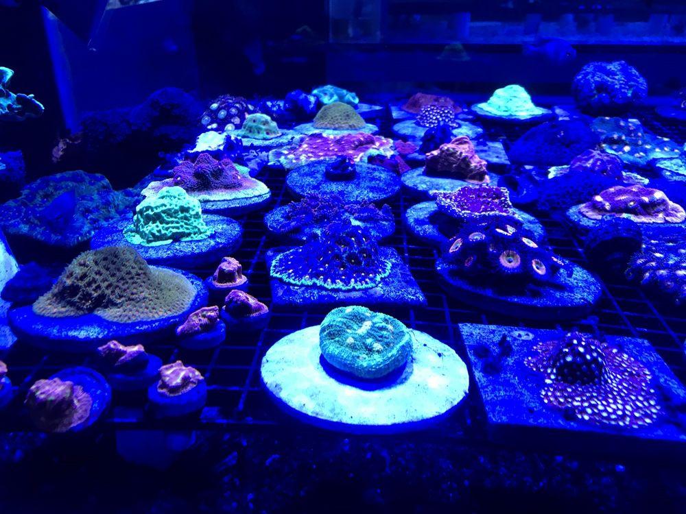 Exotic Ocean: 1530 E Yandell Dr, El Paso, TX