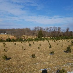 Photo Of Feezers Christmas Tree Farm   Marriottsville, MD, United States ...