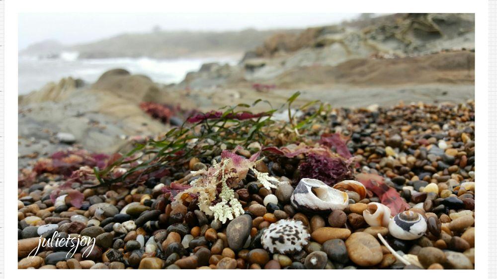 Bean Hollow State Beach: 11000 Cabrillo Hwy, Pescadero, CA