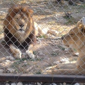 Austin rescue zoo : Bulldog inn athens ga
