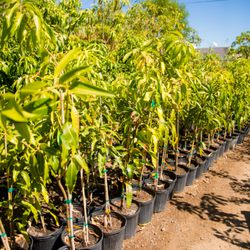 Photo Of A Tropical Concept Nursery Phoenix Az United States