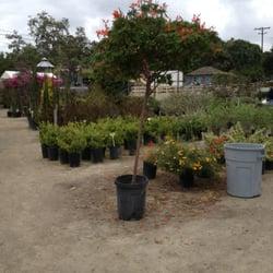 Photo Of Ito Nursery Inc San Juan Capistrano Ca United States