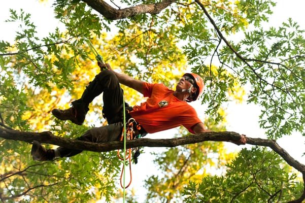 American Tree Service: 1047 County Rd 3063, Kirbyville, TX