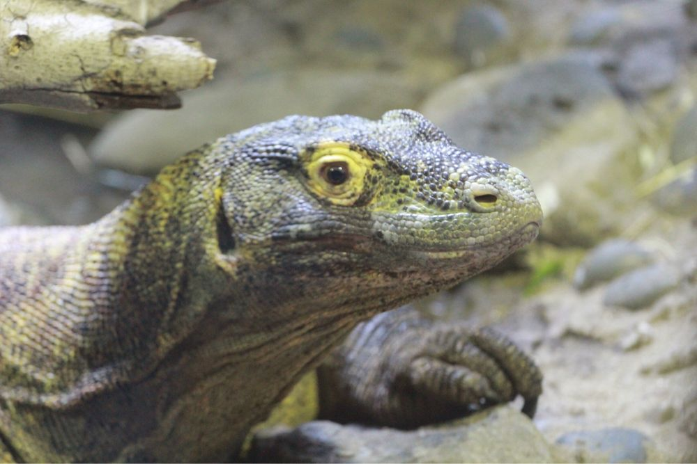 Social Spots from Essex County Turtle Back Zoo