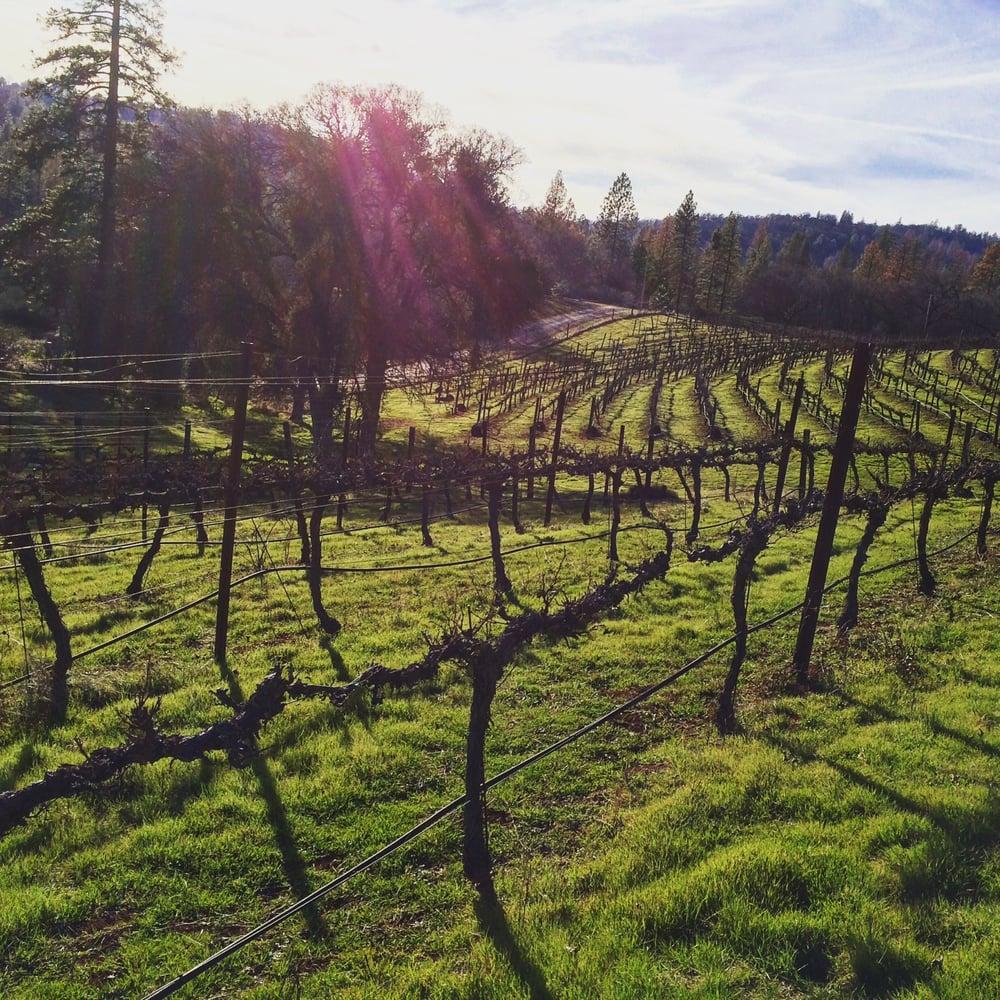 Rhodes Vineyard