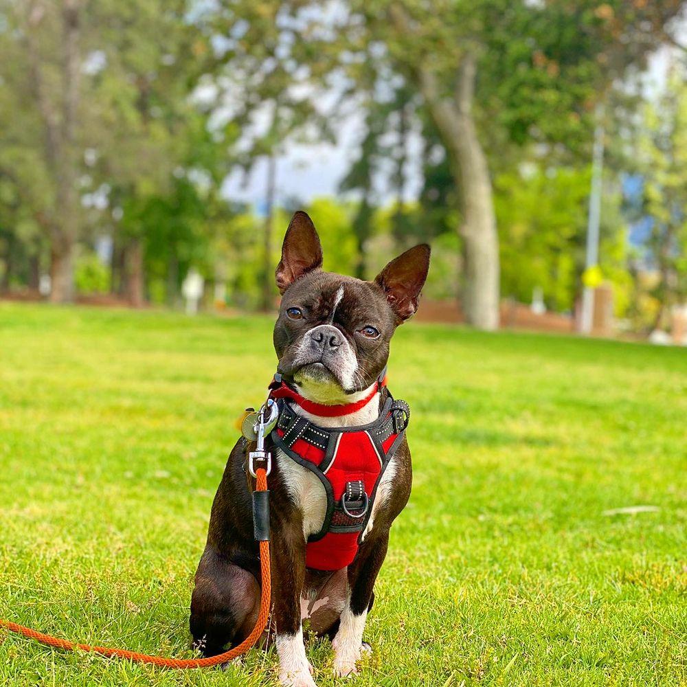 A-Team Dog Training, LLC.