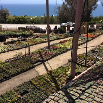 Photo Of Cosentino S Nursery Malibu Ca United States Aaaaand More Succulents