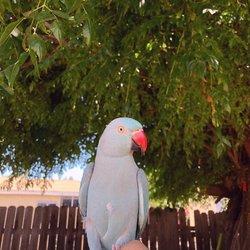 Pampered Birds - 87 Photos & 139 Reviews - Bird Shops - 3183