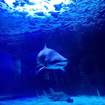 Newport Aquarium 264 Photos 224 Reviews Aquariums