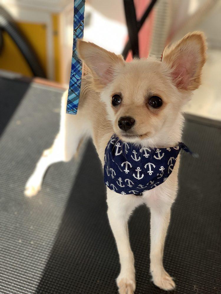 Ooh La la Mobile Pet Spa: San Dimas, CA