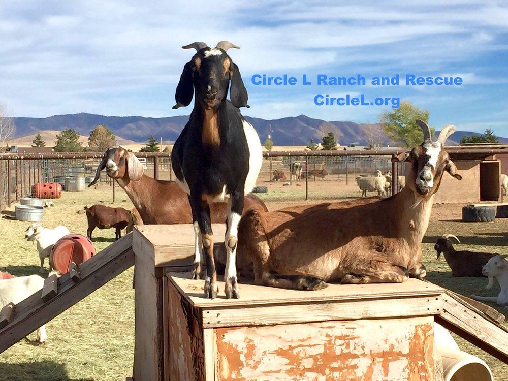 Circle L Ranch Rescue & Sanctuary: 7680 N Coyote Springs Rd, Prescott Valley, AZ
