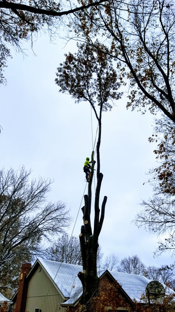 Semper Fi Tree Care: Overland Park, KS