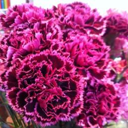 blomster louise moestrup