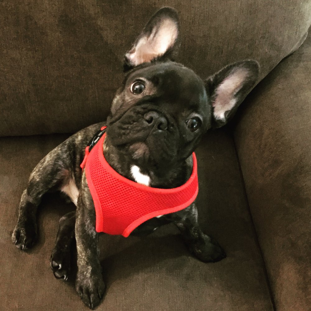 Besomomma Dog Training and Behavior Management
